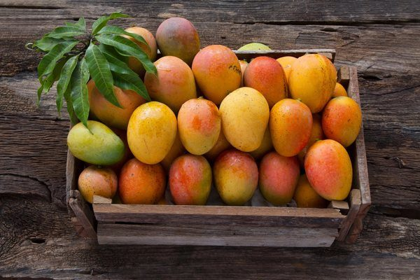 Dachser Mexico Keeps Mango Exports Flowing to Europe with Weekly Air Freight Service